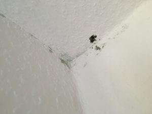 Schimmelbildung an Wand und Decke